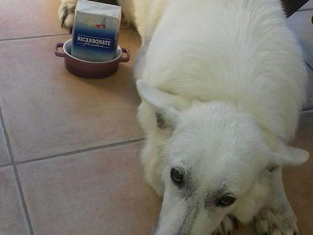 ADVICE MAIN IMAGE Désodorisant pour chien