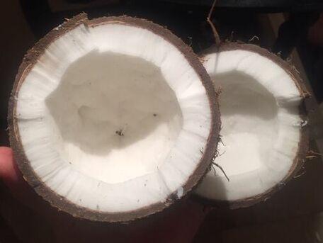 ADVICE MAIN IMAGE Comment ouvrir une noix de coco facilement