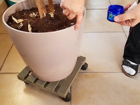 ADVICE MAIN IMAGE Repousser les chats des plantes