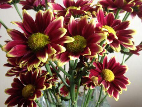 ADVICE MAIN IMAGE Pour ranimer un bouquet de fleurs qui flétrit
