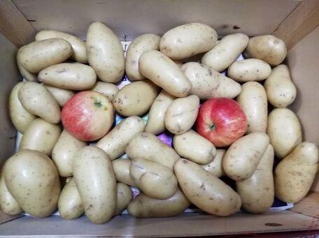 ADVICE MAIN IMAGE Empêcher les pommes de terre de germer trop vite