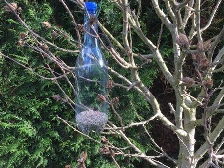 ADVICE MAIN IMAGE Recyclage : mangeoire simple pour les oiseaux l\'hiver