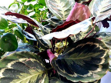 ADVICE MAIN IMAGE Les plantes sont bien plus que de la décoration.