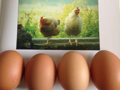ADVICE MAIN IMAGE Des conseils pour bien choisir ses œufs