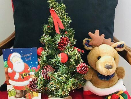 ADVICE MAIN IMAGE Bien choisir son sapin de Noël