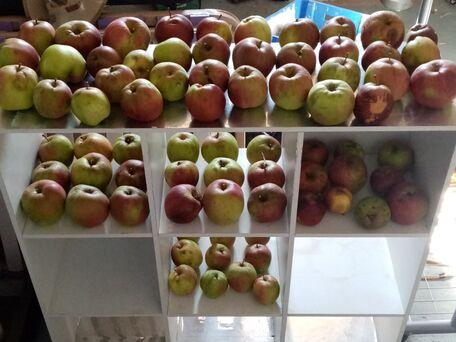 ADVICE MAIN IMAGE Conservez vos pommes