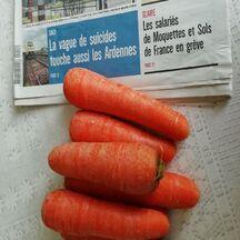 Conserver plus longtemps les carottes