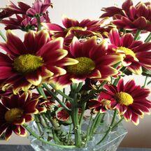 Bien conserver son bouquet frais