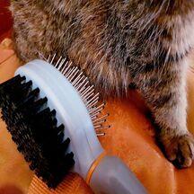 Les poils de chats, comment s\'en débarrasser...