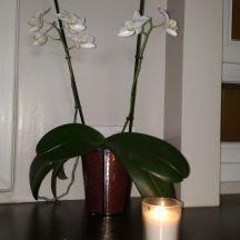Prendre soins de ses orchidées
